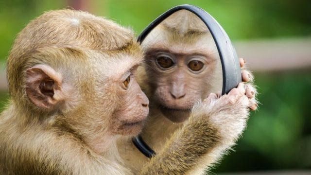 鏡の法則,恋愛,生かす,コミュニケーション,自己成長,自分磨き